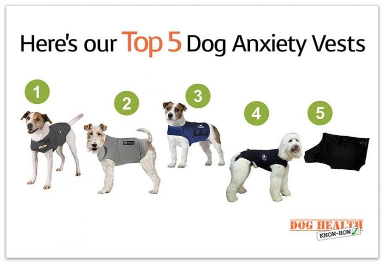 What's the Best Dog Anxiety Vest – The Top 5 Dog Anxiety Vests