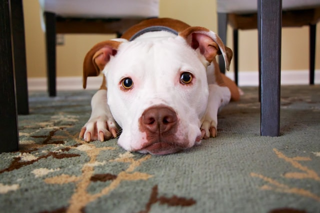 Separation Anxiety in Dogs: What You Need to Know